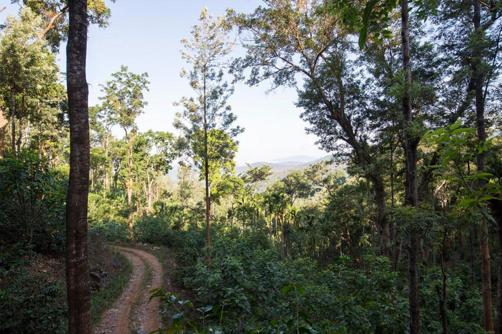 Sathyanarayana plantations